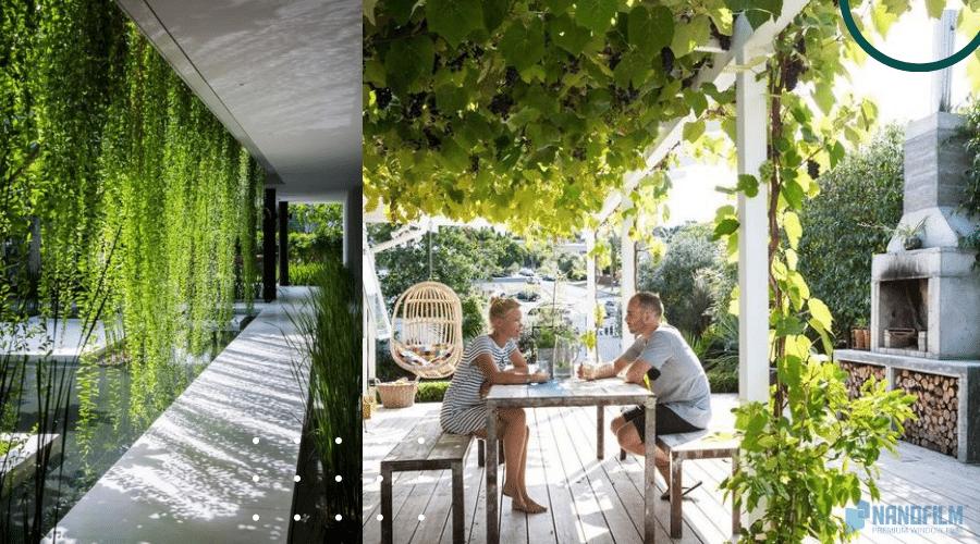 Chống nóng bằng trồng cây leo cho nhà ở