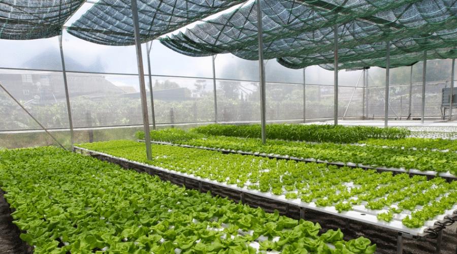 Chống nắng vườn rau bằng lưới đen