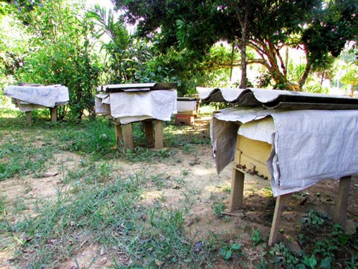 Chống nóng cho ong mật